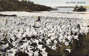 Lilly Field Bermuda Island Unused