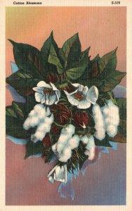 Vintage Postcard 1930's White Flowers Cotton Blossoms Floral Artwork