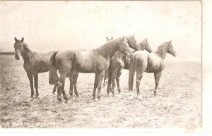 Horses. A doubtful moment  Nice vintage English postcard