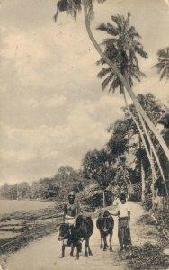 Ceylon - Colombo Bulls on the Road 03.05