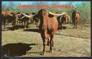 Africanda Cattle TEXAS LONGHORNS Cows - Chrome 1950s-1970s