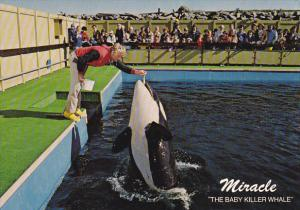 Miracle Baby Killer Whale Sealand of the Pacific Victoria British Columbia Ca...