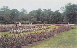 View of Rose Gardens in Maplewood Park - Rochester, New York