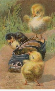 EASTER, 1909 ; 3 Chicks and a shoe ; NISTER
