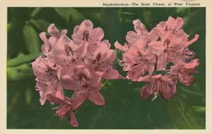 WEST VIRGINIA , 40-60s ; Rhododendron - The State Flower
