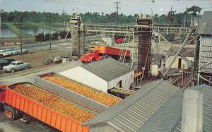 Making of Frozen Orange Juice Concentrate, Minute Maid Co.Plant, Florida, 40-60s