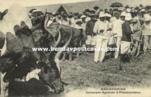 madagascar, FIANARANTSOA, Concours Agricole, Longhorn Cows, Zebu (1910s)
