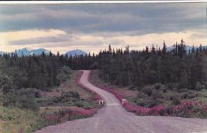 Fireweed Lining The Atlin Road In British Columbia, Yukon Territory, Canada, ...