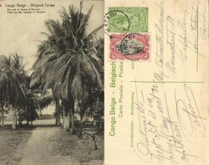 belgian congo, BANANA BANANE, View on Congo River, Palm (1920s) Postcard (05)