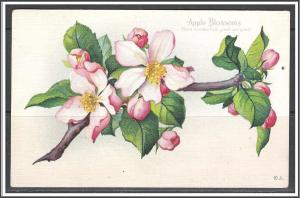 Apple Blossoms - Fame Speaks Him Great & Good - (MX-046)