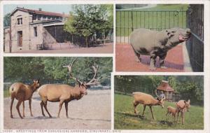 Ohio Cincinnati Greetings From Zoological Park Multi View Detroit Publishing