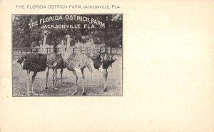 Jacksonville Florida ostriches Florida Ostrick Farm entrance antique pc BB3417