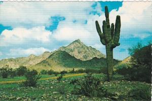 Arizona Phoenix Squaw Peak & Giant Saguaro Cactus