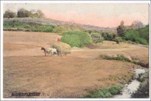 The Last Load - Hay