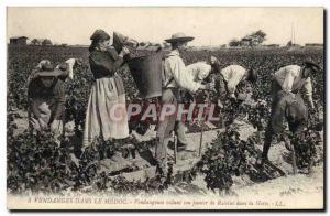 Old Postcard Folklore Wine Harvest Vineyard in the Medoc Vendangeuse emptying...