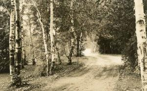 MI - Frankfort. A Country Road - RPPC