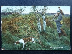 Country Life DRAWING ON GROUSE With Pointer c1909 Postcard by Woolstone Bros 653