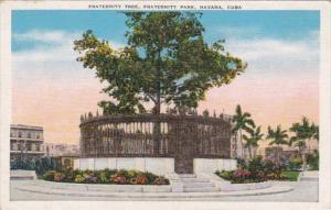 Cuba Havana Fraternity Tree In Fraternity Park