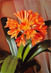 B52057 fleurs flowers boats lavande