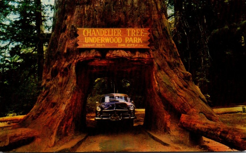 California Redwood Highway Underwood Park Chandelier Drive Thru Tree