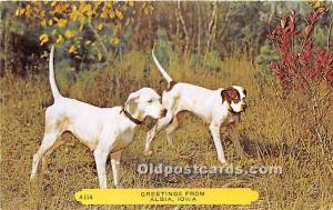 Old Vintage Hunting Postcard Post Card Hunting Dogs Albia, Iowa, IA, USA Unused