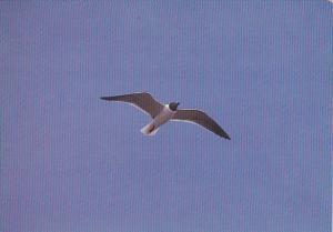 Sailing Solo Sea Gull