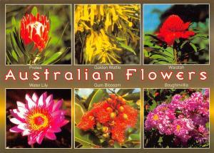 Australia Australian Flowers multiviews Water Lily Gum Blossom Waratah