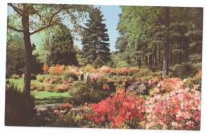 Biltmore Asheville NC Azalea Garden North Carolina Postcard
