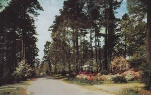 Southern Pines, lacy dogwood trees and banks of beautiful azaleas, residentia...