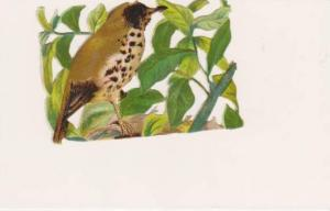 Victorian Scrap Paper: Brown Spotted Bird Sitting on Branch Among Leaves, 1890s