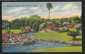 Blooming Azaleas City Park New Orleans Louisiana Unused c1930s