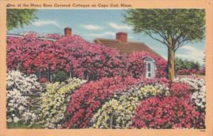 Massachusetts Cape Cod Typical Rose Covered Cottage 1957