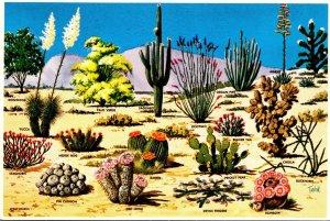 Arizona Cacti and Desert Flora Of The Great Southwest