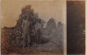 D48/ Cordova Montana Mt RPPC Postcard c1910 Corn Field Black Americana Colored