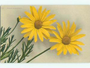 Unused Pre-Linen BEAUTIFUL LARGE YELLOW MARGUERITE FLOWERS k4137