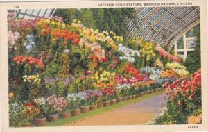 Illinois Chicago Conservatory Interior Washington Park 1947 Curteich