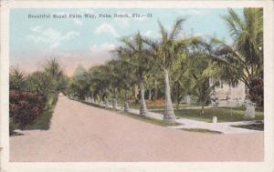 Florida Palm Beach Beautiful Royal Palm Way 1916