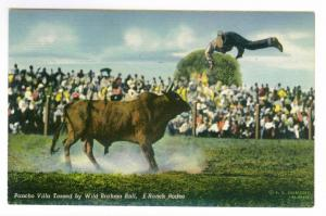 Pancho Villa Tossed by Wild Brahma Bull, E Ranch Rodeo, unused Linen PPC