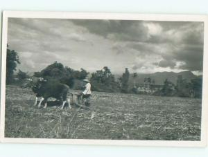 rppc 1920's PALM TREES BEHIND OX PULLING ANTIQUE PLOW ON THE FARM AC8757