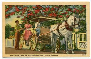 Horse Carriage Royal Poinciana Tree Nassau Bahamas linen postcard