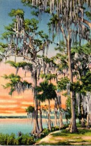 Florida Silver Lakes Bordered With Cypress and Palm Trees 1935 Curteich