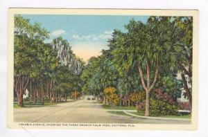 Volusia Avenue, Three Branch Palm Tree, Daytona, Florida, 1910-20s