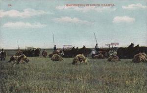 Harvesting Scene In South Dakota