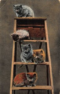 Kittens on ladder Cats Animals Postcard