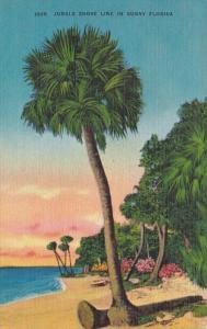 Florida Typical Jungle Shore Line 1946