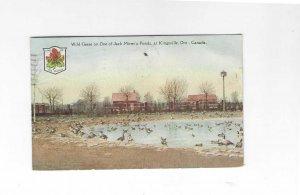 Vtg 1930 Wild Geese on Jack Miner's Pond, Kingsville, Ont, Canada Postcard