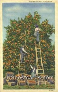 Picking Oranges Misc FL Unused