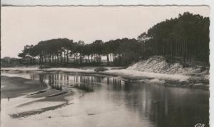 Postal 008878: Capbreton, Les pins maritimes du Bourret