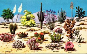 Cactus Cacti and Desert Flora Of The Great Southwest