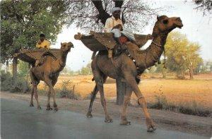 Lot156 camel view the interior sind province pakistan